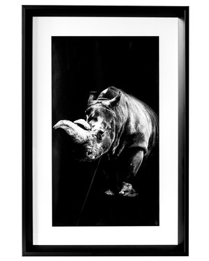 Tavla Rhino
